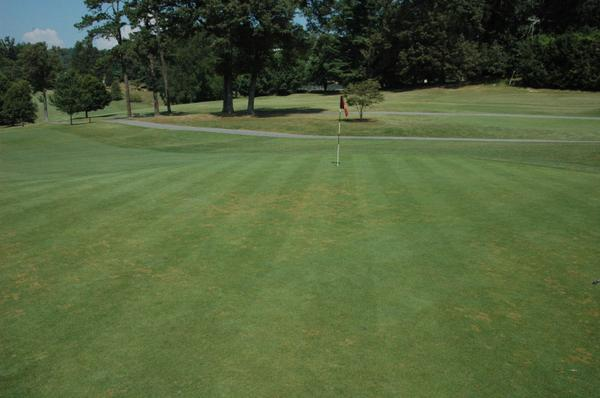 Anthracnose stand symptoms