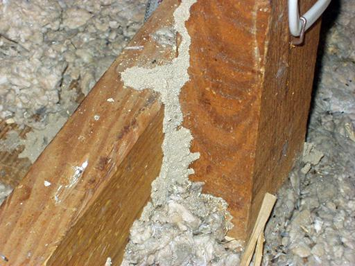 Termite tube on attic joist