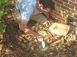 Figure 4. Bait tube installation in termite-active station.