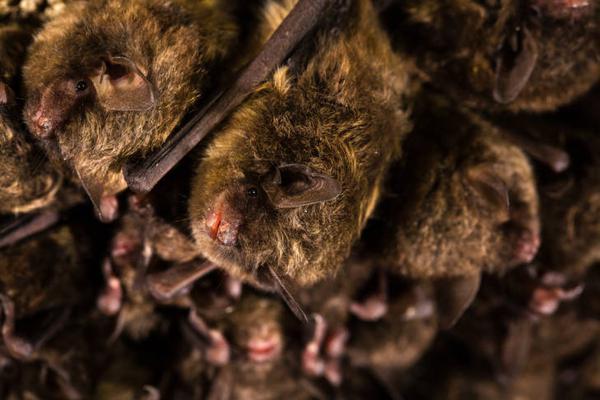 Hagerty Ind Bat