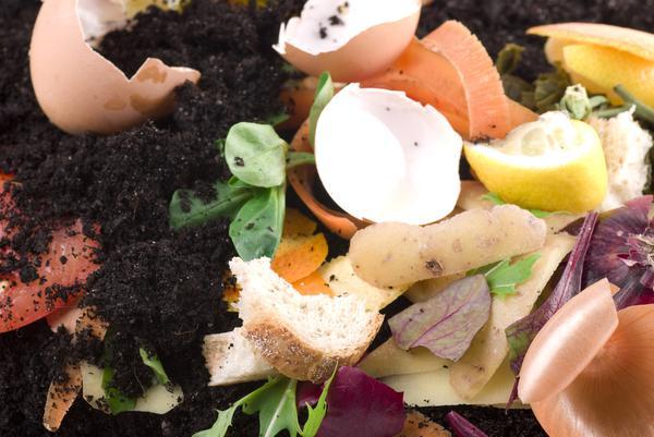 Figure 1. Food scraps for composting.