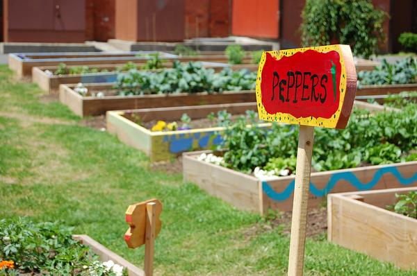 A photo of a community garden