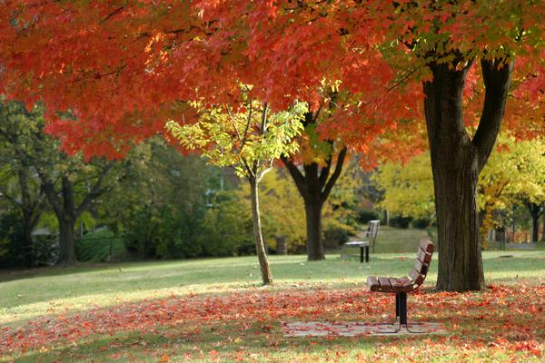 Picture of a park bench surrounded by trees