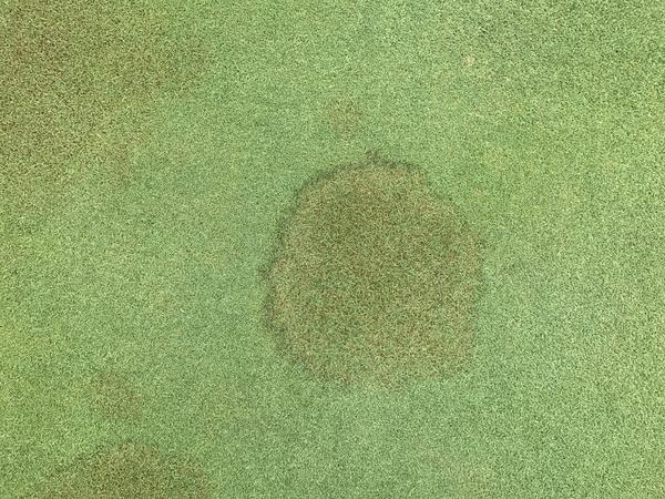 Brown patch in creeping bentgrass