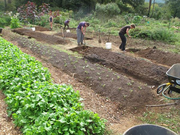 People work in a community food garden.