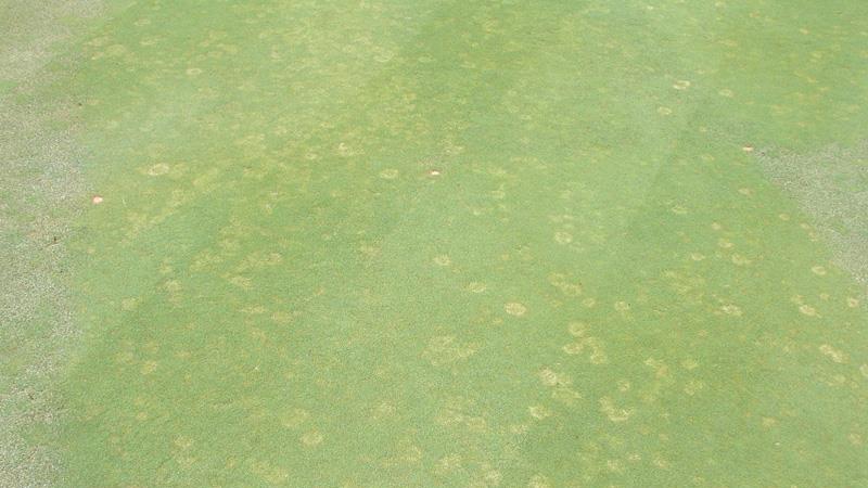 Copper spot stand symptoms.