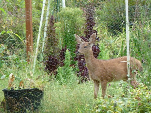 Keep Deer Out Of Garden Bhbrinfo
