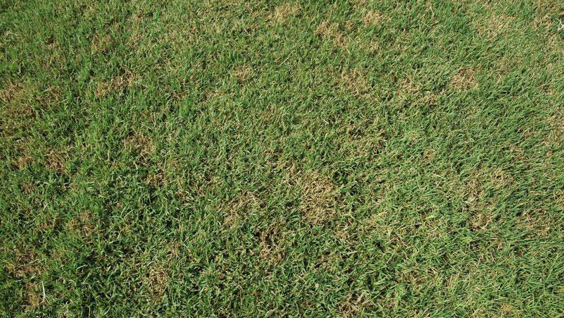 Thumbnail image for Dollar Spot in Turf