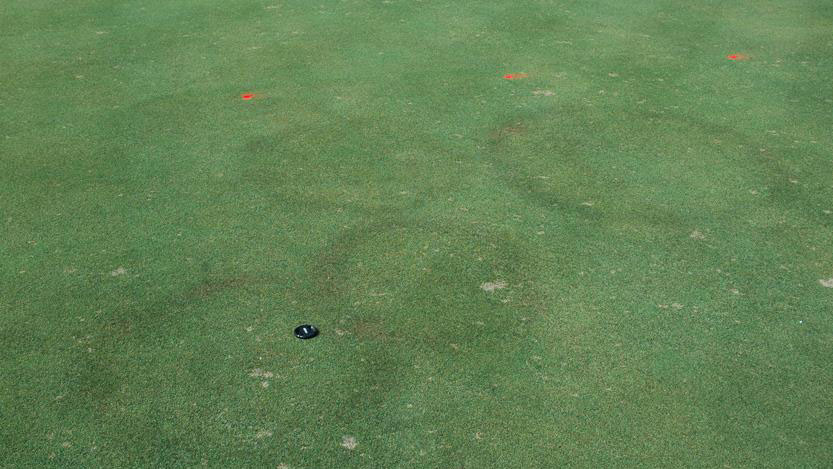 Fairy ring stand symptoms