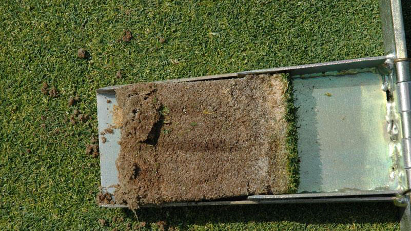 Fairy ring root symptoms.