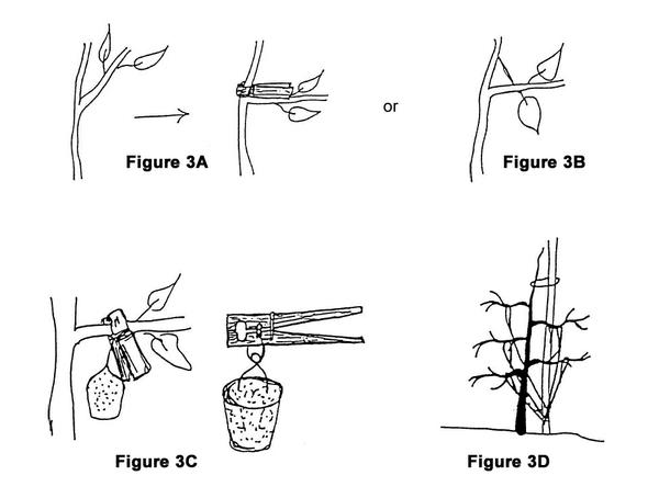 Figure 3. Methods for creating wide crotch angles