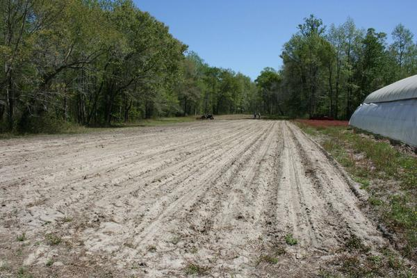 Figure 10. Fields are ready for planting at the Onslow County In