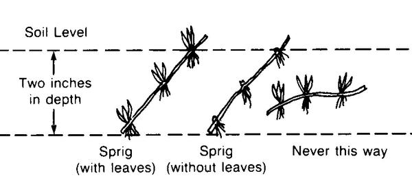 Figure 4. Cross-section of space planting.