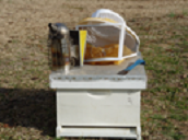 Figure 3. Beekeeping gear: hive, tool, smoker, and veil.