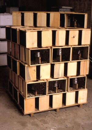 honey bee pallet