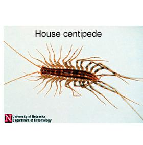 Figure 2. Centipedes have one pair of legs per body segment.
