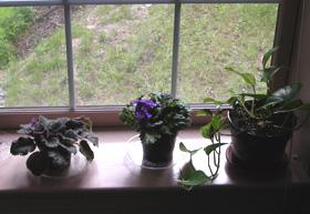 Figure 4. Indoor potted plants that hold excessive moisture can