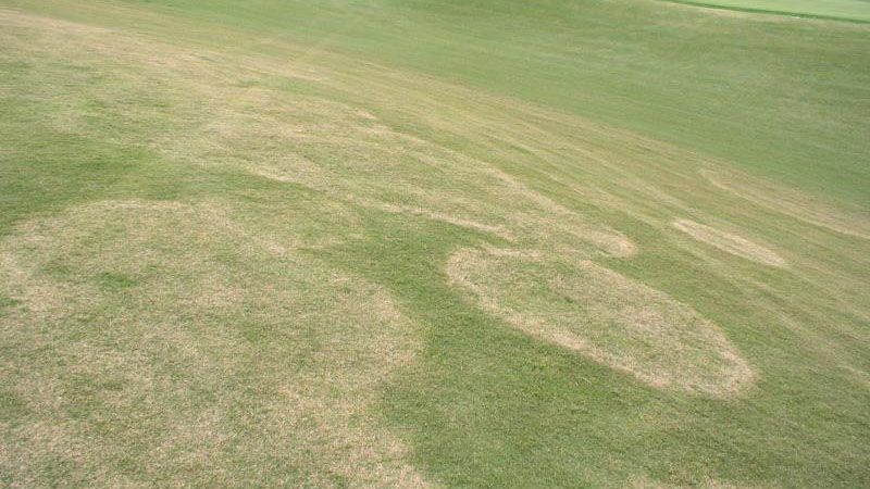 Large patch stand symptoms.