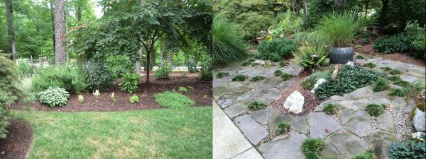 lawn before after