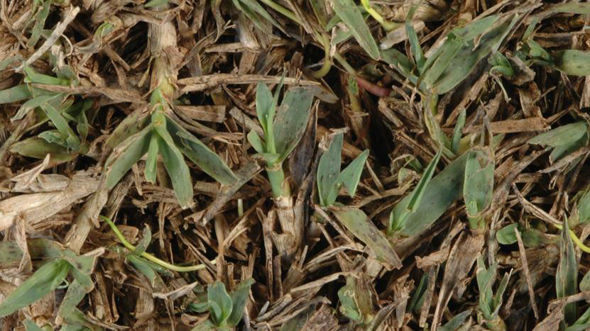 Leaf Spot Nc State Extension