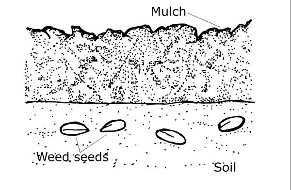 mulch reduce weed seeds