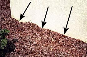 Figure 6. Mulch piled up around the foundation can allow ants to