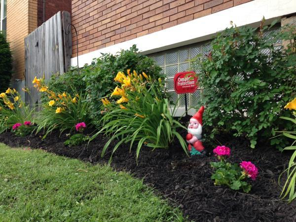 mulch to reduce weeds