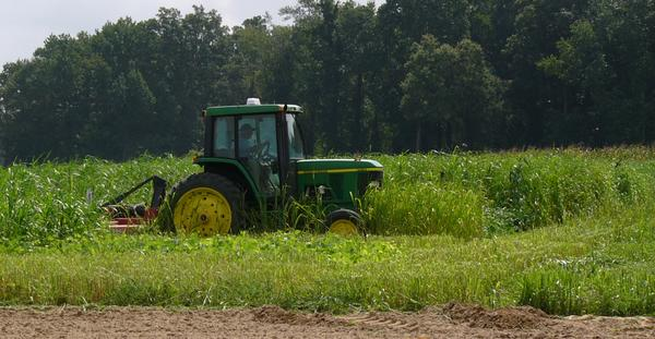 Photo of a flail mower in the field.