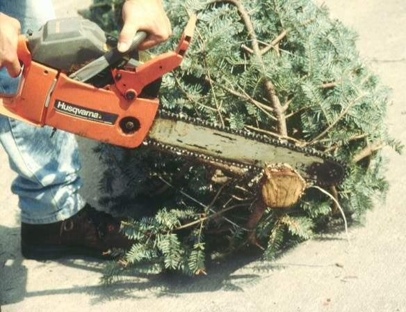 Cutting off a thin disk from a tree trunk using a chainsaw