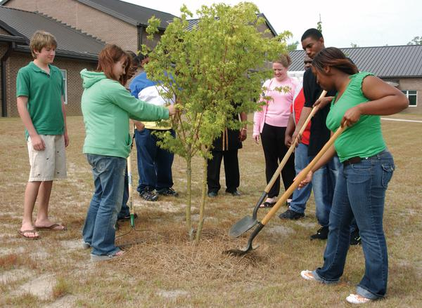 A group of people plant a tree.