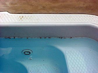 Photo of dead millipedes floating in swimming pool