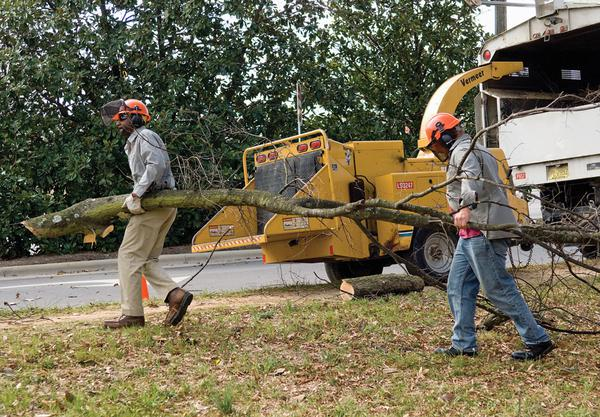 Arborists carry a tree limb to a wood chipper.