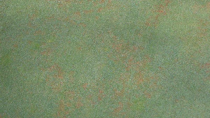 Red leaf spot stand symptoms