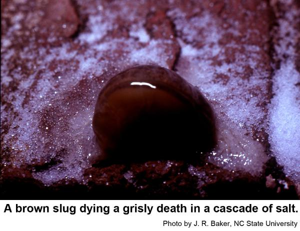slug salted to death