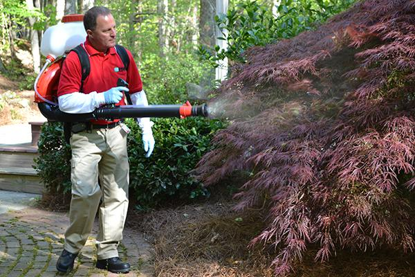 Spraying shrubs where mosquitoes are resting