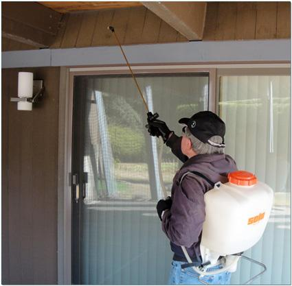 Spraying patio roof overhang to control kudzu bugs