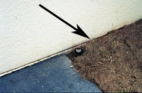 Figure 1. Pine mulch covering the bottom of house stucco siding