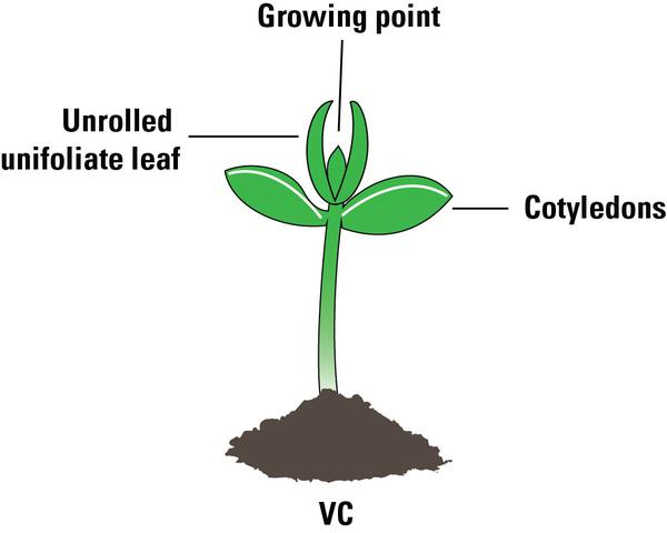 VC growth stage.