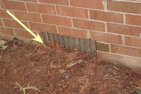 Figure 5. Mulch piled up around the foundation can allow ants to