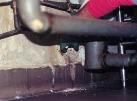 Figure 3. Leaky pipes can create an area conducive to booklice.